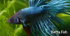 1000 images about amazingaquatics on pinterest for Petsmart fish guarantee
