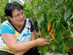 Úspěšná pěstitelka se silnými a kompaktními rostlinami paprik, jaké se jí Polo Shirt, Mens Tops, Polos, Polo Shirts, Polo