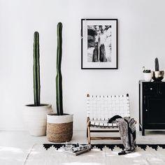 Luxe interior #home #luxe #cactus via @indiehomecollective