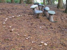 """Fairy ring of mushrooms around """"mushrooms"""" of little tree stumps and flat stones at Earth Sanctuary 