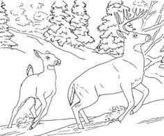 Deer Running Coloring Pages