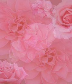 Pink Rose Collage In Shades Of Rose Gold Background
