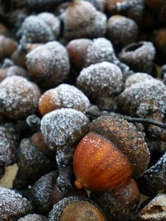 """sweetwhiteviolets:  """"Every time I see the acorns still wearing their caps I feel the need to collect them and place them in a bowl."""""""