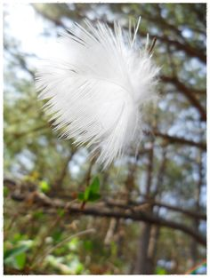 A simple feather can even be beautiful in the right situation.........
