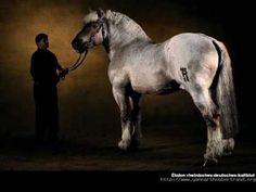 Yann arthus bertrand et les chevaux