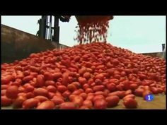 ▶ Tomatina 2013 - Excellent, informative video. Fairly comprehensible, but very long!