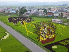 The artworks are created by cultivating different types of rice around the fields