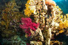 Coral garden by sergemi Underwater Photography #InfluentialLime