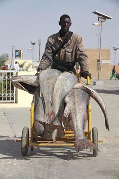 Africa | 'Catch of the Day'.  Nouakchott, Mauritania | © Ferdinand Reus