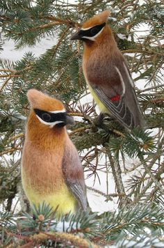 Needle felt waxwings. We have a lot of Cedar Waxwings here. Seems like the perfect bird to felt.