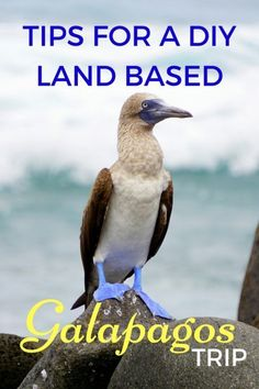 Guide and Tips for a DO-IT-YOURSELF DIY Land Based Galapagos Islands trip with kids including itinerary and budget