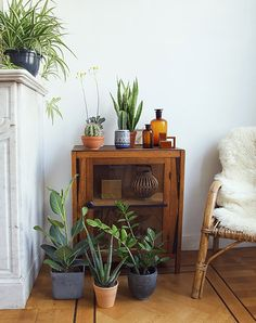 Vintage Apothocary Jars Styled With Potted Houseplants Sfgirlbybay