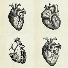 "hearts: both my parents are cardiologists, they spend more time with this organ than they do with anything else in the world. the other day i told my mom, ""no heart attacks today, they can all wait for tomorrow""."