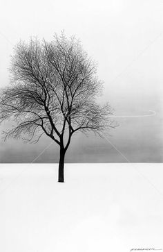 December 11: A lone maple stands in mute wintry beauty, offering its network of twigs as a testimony of life in a cold, perfectly square Zen of infinite sky.