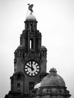Liver bird ,Liverpool. Liverpool History, Liverpool Home, Liverpool England, Building Tattoo, City Drawing, Dream City, My Dream Home, Tower Clock, Tattoo Ideas