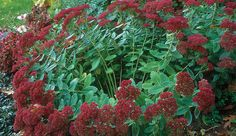 10 Tips on Dividing Perennial Plants: Divide to make healthier plants--and more of them. Learn it all here http://www.finegardening.com/how-to/articles/dividing-perennials.aspx