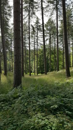 Green, Cannock Chase. Edited using VSCO. West Midlands, Vsco, Trail, Landscape, Green, Nature, Plants, Naturaleza, Planters