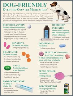 Https Topdogtips Pain Management For Dogs