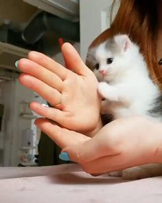 Cute kitty. Follow for more. Visit the link for cat lovers items