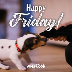 ☕Smile😃Friday is here. Friday Morning Quotes, Good Morning Happy Friday, Happy Friday Quotes, Morning Greetings Quotes, Morning Humor, Good Morning Gif Funny, Cute Good Morning Quotes, Good Morning My Love, Happy Friendship Day Quotes