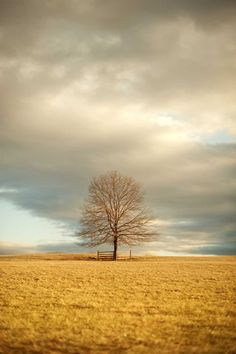Landscape Photography, Lone Tree In Field, Sky Photograph, Pastel, Golden Sunlight, Rustic Wall Art, Blue Sky, Nature Photo by CarlChristensen on Etsy https://www.etsy.com/au/listing/44339697/landscape-photography-lone-tree-in-field