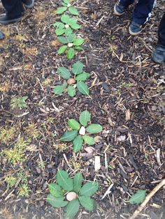 Forest School flowers made with leaves and stones