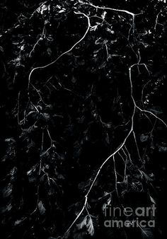 Weeping Beech Lightning - photograph by James Aiken  #abstractart #treebranches #bwphotography #buyfineart via @jamesaiken09