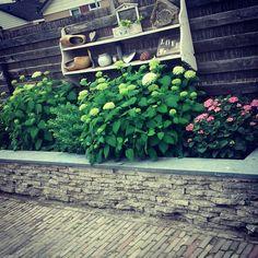 Border stoeptegel natuursteen Hortensia