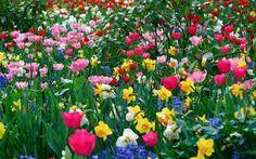 flowers - Buscar con Google