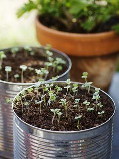 Luxury Herb garden in a can