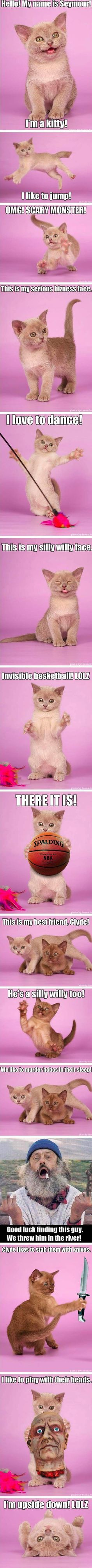 i don't know why but this deeply entertained me #catsmemelaughingsohard