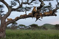 A Tree With Pride Photo by YARON SCHMID — National Geographic Your Shot