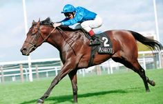 Dubai Millennium(1996) Seeking The Gold- Colorado Dancer By Shareef Dancer. 4x5 To Native Dancer & Tom Fool, 5x5 To War Admiral. 10 Starts 9 Wins. Won Prince Of Wales's S(Eng-1), Dubai World Cup(UAE-1), Queen Elizabeth II S(Eng-1), Prix Jacques Le Marois S(Fr-1), Prix Eugene Adam(Fr-2), Predominate S(Eng).  Euthanized In 2001 After Only Siring One Crop Of 56 Foals.