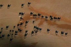 Look closely--the images you see are shadow cast by a caravan of camels photographed from directly overhead. The little white lines are the camels. Good job George Steinmetz from National Geographic! National Geographic, Photoshop, Cool Pictures, Cool Photos, Amazing Photos, Famous Photos, Epic Photos, Amazing Facts, It's Amazing