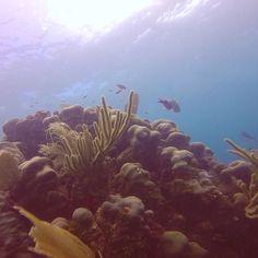 Snorkelling Flowers Bay Roatan Honduras #travel #dream #centralameripa #snorkeling #fish #reef #travelgram #worldtraveller #swimming #reef #wanderlust #bluewater #ilovefish #roatan #honduras #islandlife #sunshine #diving #snorkelling #laceiba #cruise #flowersbay #swimlove #caribbean #coral #travellove #travelphotography #gopro #caribbeansea #travelcentralamerica by pepperkate_