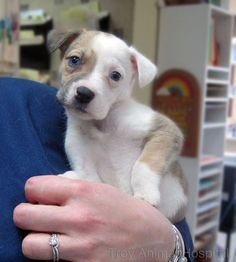 Can you think of a better way to end your work day than with this adorable pup?
