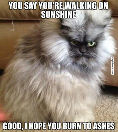 YOU SAY YOU'RE WALKING ON SUNSHINE GOOD, I HOPE YOU BURN TO ASHES - Pissed off cat | Pegitboard Meme Generator
