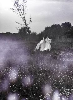 """Striga"", 2013. © Nona Limmen http://www.etsy.com/shop/NonaLimmen  One of my fav artist"