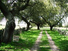 """Camino de """"El Campo"""""""