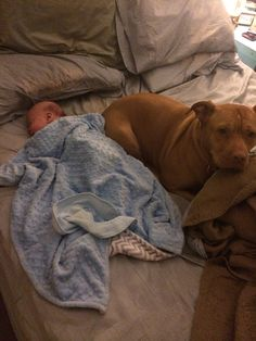 Our pitbull Lola loves her little brother! She always has to nap beside him.