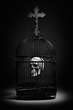 Skull cage.                                                                                                                                                                                 More