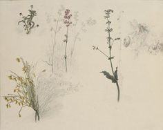 Caspar David Friedrich and the German Romantic Landscape: Study of Flowers: Three-color Violet, Vaccaria, Sage, Rosehip and Broom, 1816