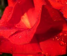 reflections seem so much more clear  when they are sparkling   in a drop of rose