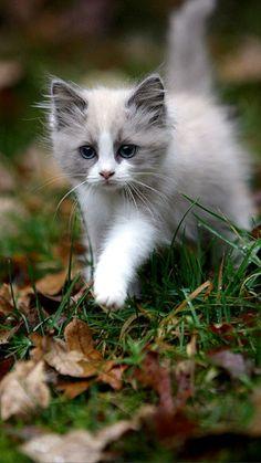 Wandering Kitten