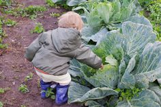 3 Steps To Fight Climate Change In The Garden: http://www.momscleanairforce.org/climate-change-garden/