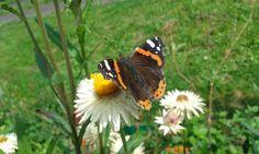 Motyl w moim ogrodzie