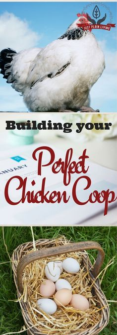 Taking care of chickens can be as easy as you want it to be and chicken coop plans can be as simple or as fancy as you wish and are willing to build. This is a basic guide on setting up your first chicken coop, how you should build and keep the surroundin Portable Chicken Coop, Best Chicken Coop, Chicken Coop Plans, Building A Chicken Coop, Chicken Runs, Chicken Coops, Keeping Chickens, Raising Chickens, Nail Swag