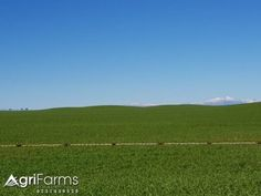 Wheat & Livestock Farm | AGF0375 Livestock Farming, West Coast, Farms, South Africa, Camping, Water, Travel, Campsite, Gripe Water