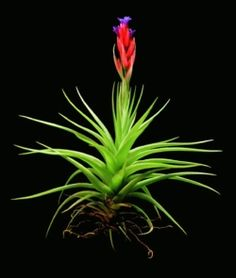 air plant store