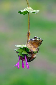 Little Frog swinging in the air